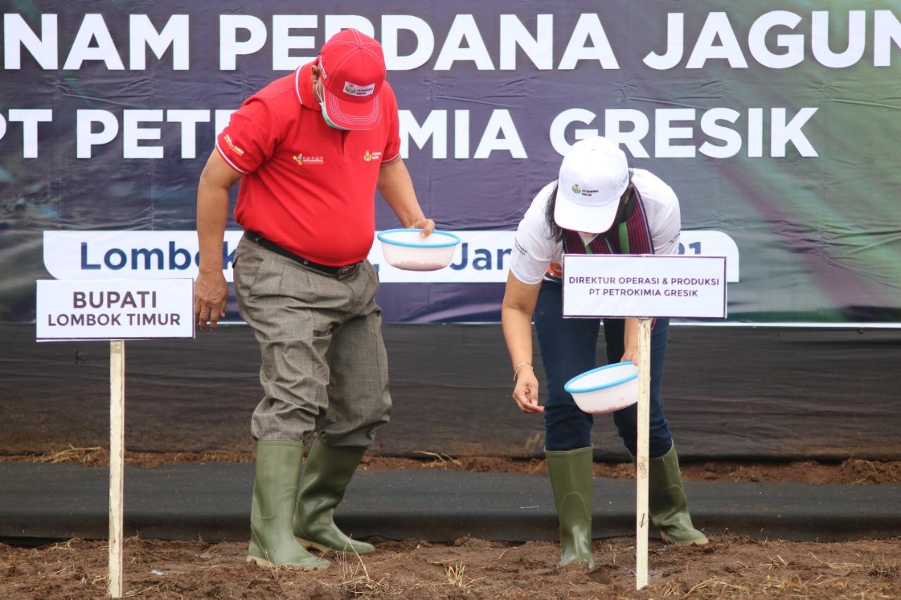 Tanam Jagung di Lombok Timur Jadi Pilot Project Petrokimia Gresik